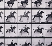 muybridge